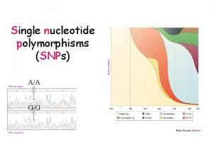 Single nucleotide polymorphisms SNPs AA GG Single nucleotide