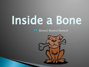 Inside a Bones What are your bones made