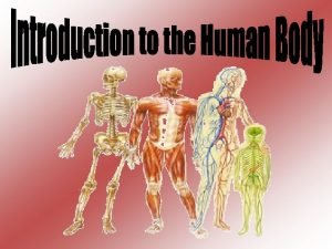 Anatomy study of structure morphology of body parts