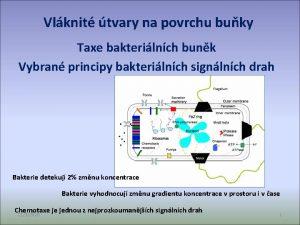 Vlknit tvary na povrchu buky Taxe bakterilnch bunk