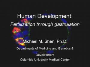 Human Development Fertilization through gastrulation Michael M Shen