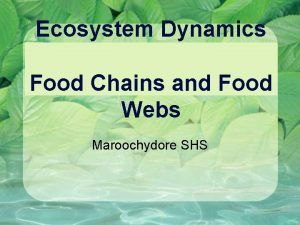 Ecosystem Dynamics Food Chains and Food Webs Maroochydore