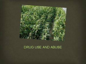 DRUG USE AND ABUSE CANNABIS CANNABIS 3 TYPES