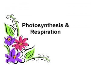 Photosynthesis Respiration WHAT DO PLANTS NEED FOR PHOTOSYNTHESIS