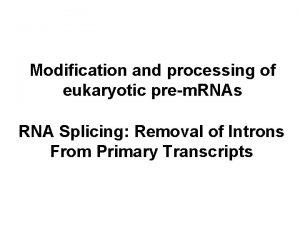 Modification and processing of eukaryotic prem RNAs RNA