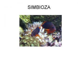 SIMBIOZA Vie od polovice vrsta na svijetu ivi
