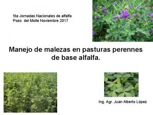 5 ta Jornadas Nacionales de alfalfa Pozo del