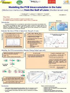 Modelling the PCB bioaccumulation in the hake Merluccius