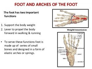 FOOT AND ARCHES OF THE FOOT The foot