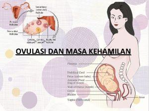 OVULASI DAN MASA KEHAMILAN Siklus Menstruasi terdiri dari