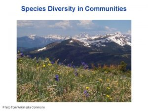 Species Diversity in Communities Photo from Wikimedia Commons