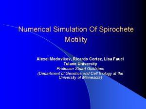 Numerical Simulation Of Spirochete Motility Alexei Medovikov Ricardo