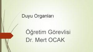Duyu Organlar retim Grevlisi Dr Mert OCAK Gz