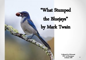 What Stumped the Bluejays by Mark Twain Gathered
