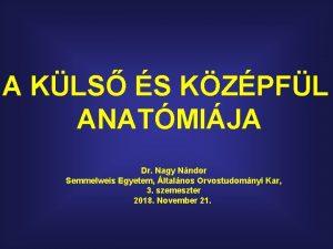 A KLS S KZPFL ANATMIJA Dr Nagy Nndor