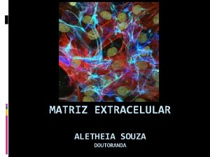 MATRIZ EXTRACELULAR ALETHEIA SOUZA DOUTORANDA Matriz extracelular Definio