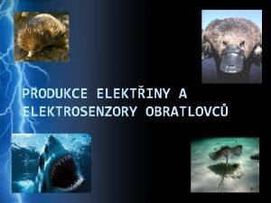PRODUKCE ELEKTINY A ELEKTROSENZORY OBRATLOVC Elektrorecepce elektrocepce schopnost