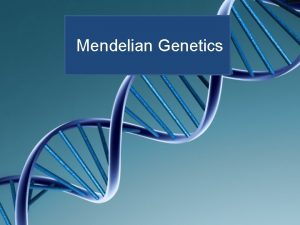 Mendelian Genetics Incomplete Dominance Example Snap dragons Red