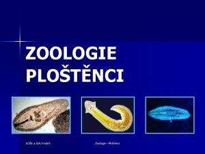 ZOOLOGIE PLOTNCI SOS a SOU Kada Zoologie Plotnci