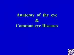 Anatomy of the eye Common eye Diseases Bony