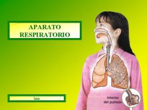 APARATO RESPIRATORIO laza La funcin del aparato respiratorio