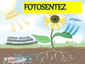 FOTOSENTEZ Bitkilerin atmosfer CO 2ni su varlnda k