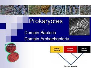 Prokaryotes Domain Bacteria Domain Archaebacteria Domain Bacteria Domain