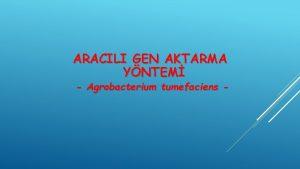 ARACILI GEN AKTARMA YNTEM Agrobacterium tumefaciens SI I