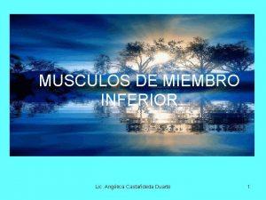 MUSCULOS DE MIEMBRO INFERIOR Lic Anglica Castadeda Duarte