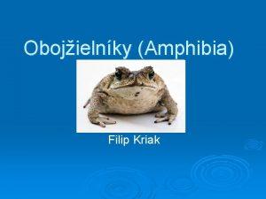 Obojielnky Amphibia Filip Kriak Charakteristika Obojivelnky tvoria prechod