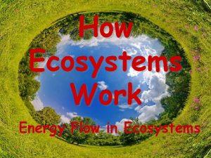How Ecosystems Work Energy Flow in Ecosystems Energy