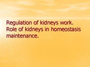 Regulation of kidneys work Role of kidneys in