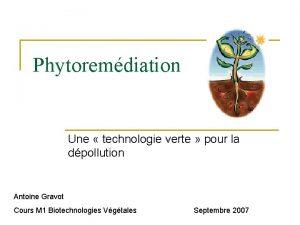 Phytoremdiation Une technologie verte pour la dpollution Antoine