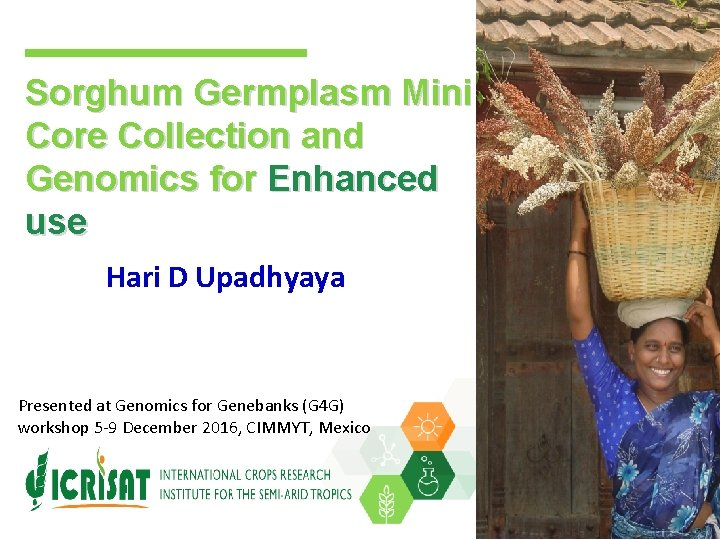 Sorghum Germplasm Mini Core Collection and Genomics for