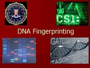 DNA Fingerprinting Why Use DNA Fingerprinting DNA fingerprinting