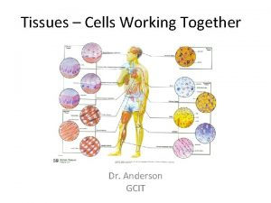 Tissues Cells Working Together Dr Anderson GCIT Tissues