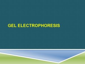 GEL ELECTROPHORESIS FIRST WHAT Simply put gel electrophoresis