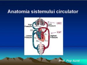 Anatomia sistemului circulator Prof Pop Aurel Inima este