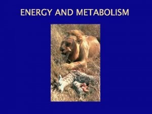 ENERGY AND METABOLISM The Energy of Life The