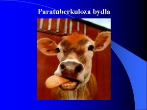Paratuberkuloza byda Paratuberkuloza Choroba Johnego paragrulica Przewleke wyniszczajce