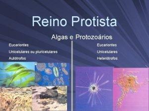 Reino Protista Algas e Protozorios Eucariontes Unicelulares ou