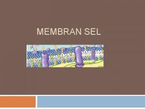 MEMBRAN SEL Membran sel berfungsi Membatasi sel dengan