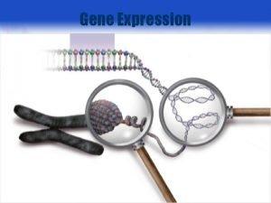 Gene Expression 1 RNA Processing Prem RNA m