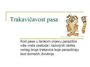 Trakaviavost pasa Kod pasa u tankom crijevu parazitira