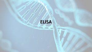 ELISA ELISA Understanding the Acronym EL EnzymeLinked An