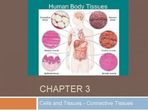 CHAPTER 3 Cells and Tissues Connective Tissues Body