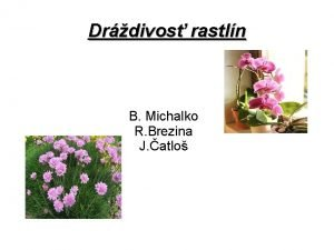 Drdivos rastln B Michalko R Brezina J atlo
