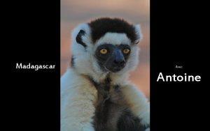 Madagascar Avec Antoine automatique Antoine le sifaka et