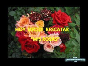HOY DECIDI RESCATAR MIS ROSAS Decid rescatar Mis