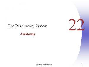 The Respiratory System Anatomy Chapter 22 Respiratory System
